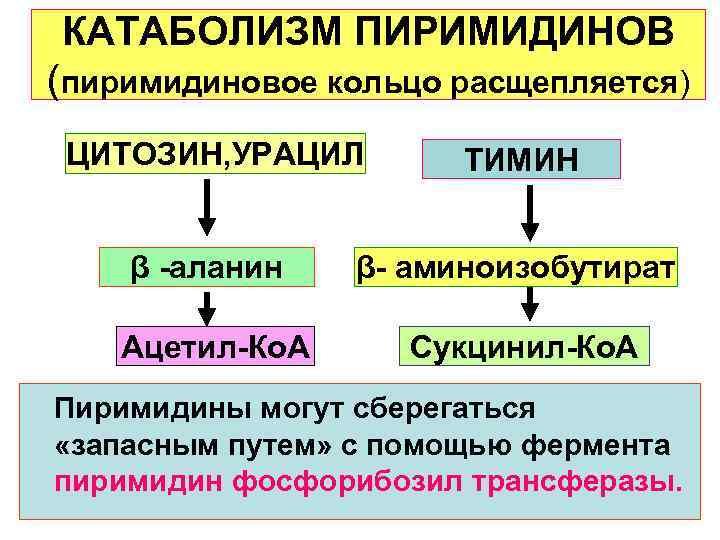 КАТАБОЛИЗМ ПИРИМИДИНОВ (пиримидиновое кольцо расщепляется) ЦИТОЗИН, УРАЦИЛ  ТИМИН  β -аланин  β-