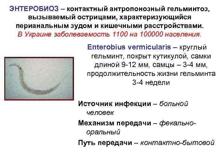 ЭНТЕРОБИОЗ – контактный антропонозный гельминтоз,  вызываемый острицами, характеризующийся перианальным зудом и кишечными расстройствами.