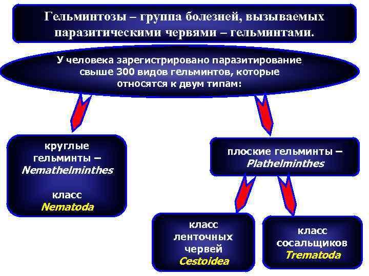 Гельминтозы – группа болезней, вызываемых паразитическими червями – гельминтами.  У человека