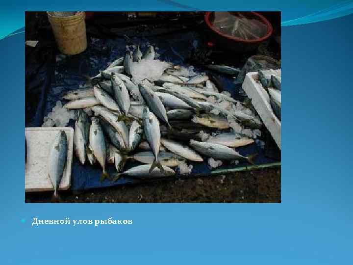Дневной улов рыбаков