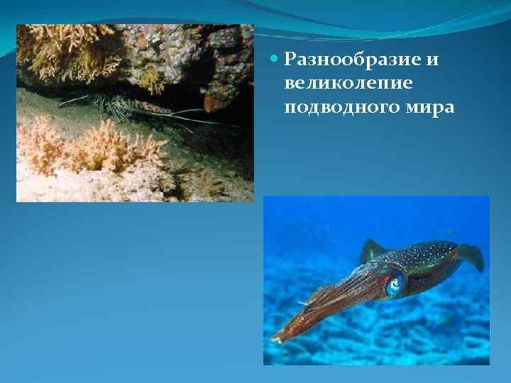 Разнообразие и  великолепие  подводного мира
