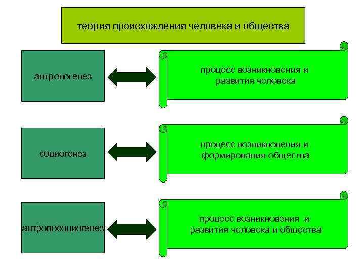 теория происхождения человека и общества       процесс