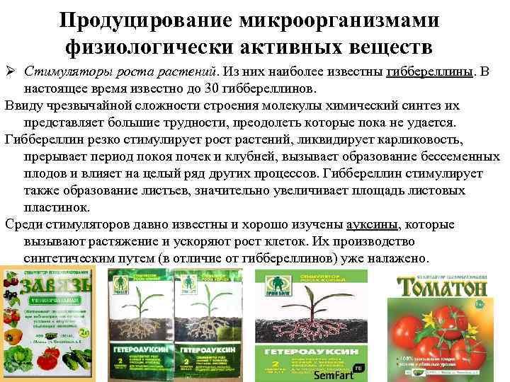 Продуцирование микроорганизмами физиологически активных веществ Ø Стимуляторы роста растений. Из них наиболее известны гиббереллины.