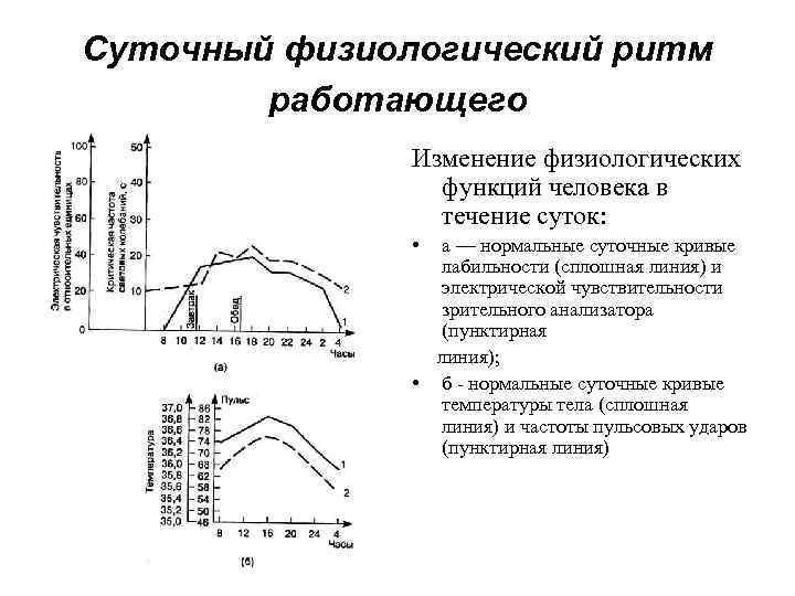 Суточный физиологический ритм   работающего    Изменение физиологических   функций