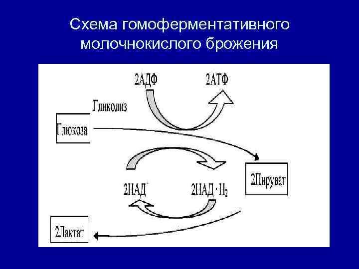 Схема гомоферментативного  молочнокислого брожения