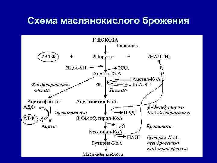 Схема маслянокислого брожения