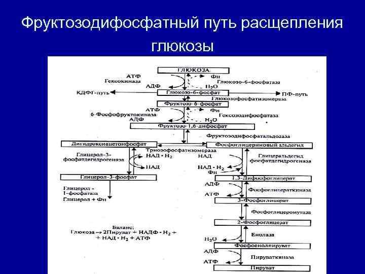 Фруктозодифосфатный путь расщепления    глюкозы