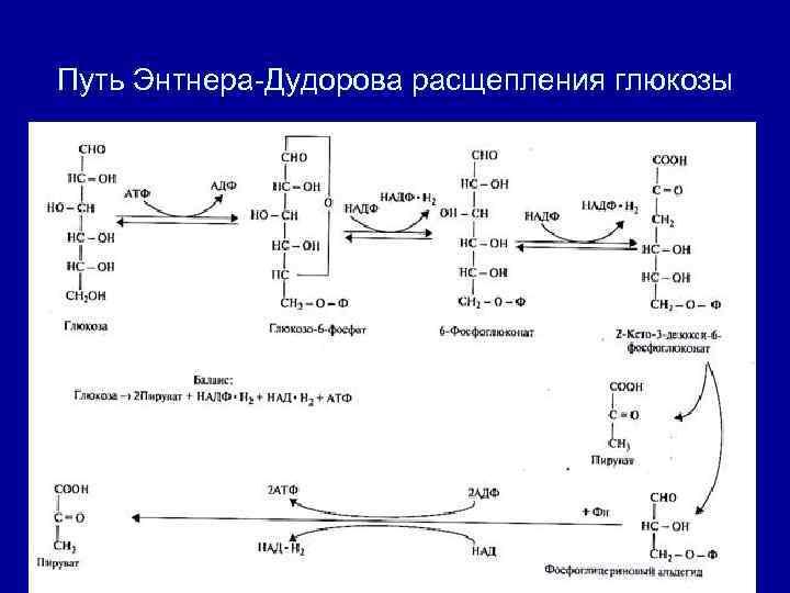 Путь Энтнера-Дудорова расщепления глюкозы
