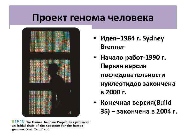 Проект генома человека   • Идея– 1984 г. Sydney   Brenner