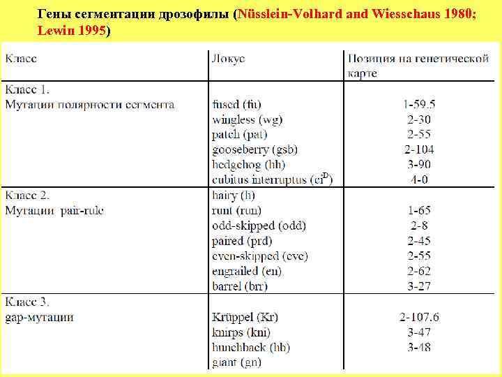 Гены сегментации дрозофилы (Nüsslein-Volhard and Wiesschaus 1980;   Lewin 1995)