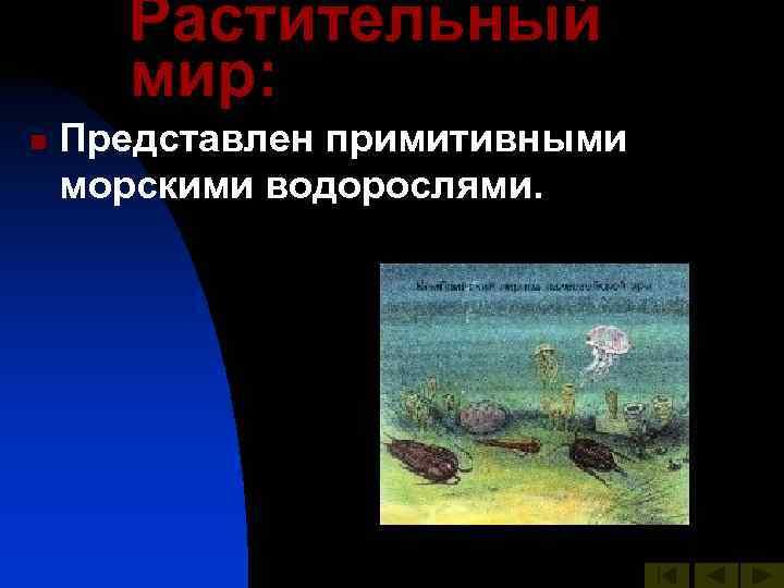 Растительный  мир: n  Представлен примитивными морскими водорослями.
