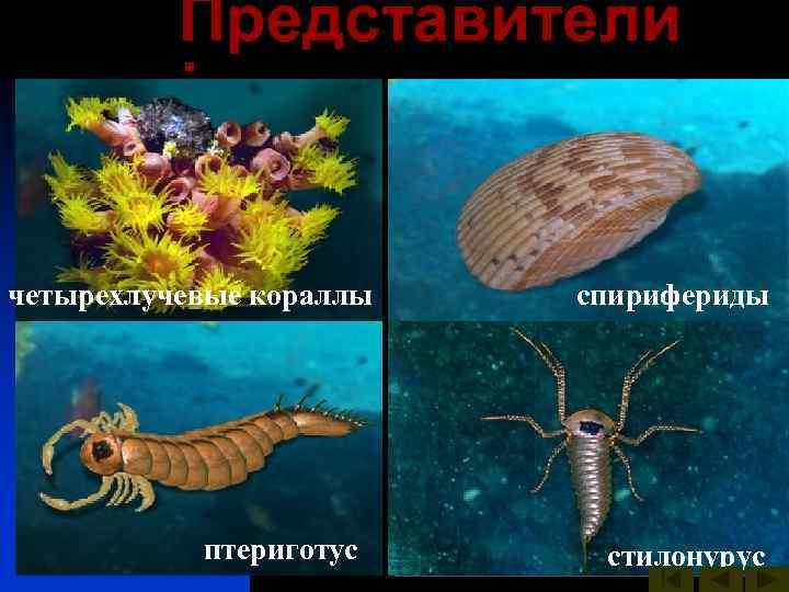 Представители  :   птераспис четырехлучевые кораллы акантоды  морская
