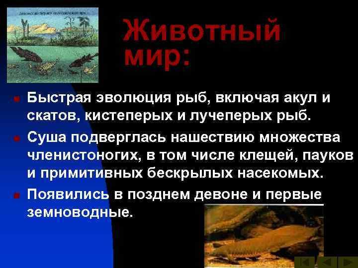 Животный   мир: n  Быстрая эволюция рыб, включая