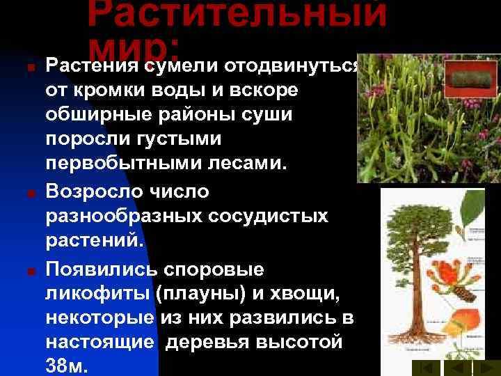 Растительный n  мир: Растения сумели отодвинуться от кромки воды и вскоре