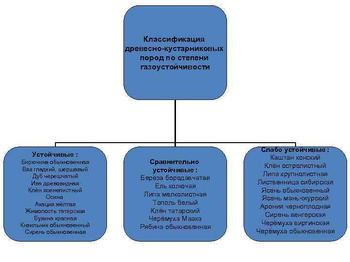 Классификация     древесно-кустарниковых