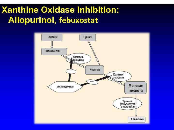 Xanthine Oxidase Inhibition:  Allopurinol, febuxostat
