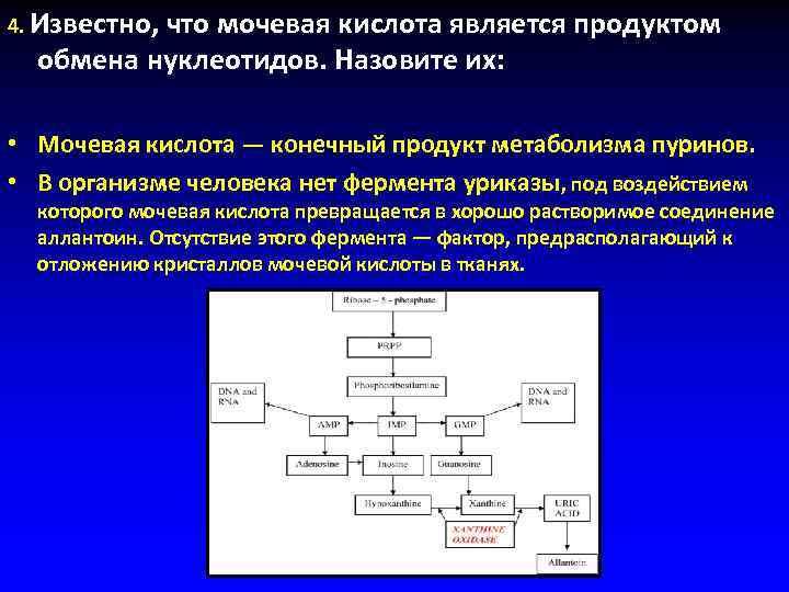4. Известно, что мочевая кислота является продуктом  обмена нуклеотидов. Назовите их: • Мочевая