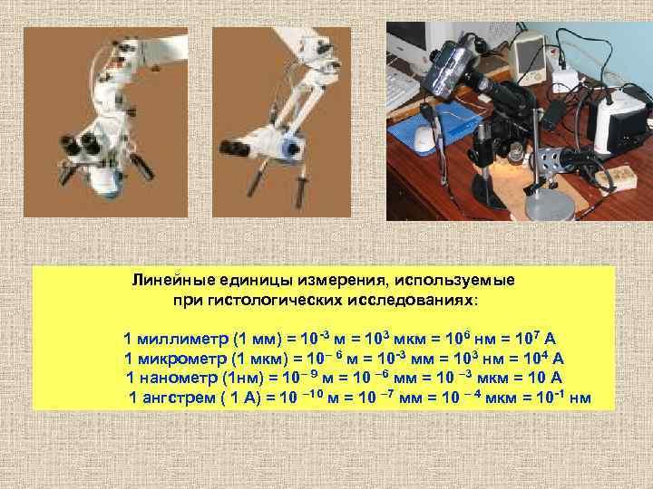 Линейные единицы измерения, используемые    при гистологических исследованиях: