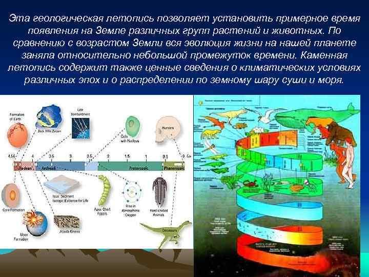 Эта геологическая летопись позволяет установить примерное время появления на Земле различных групп растений и
