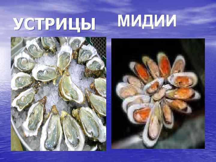 устрицы и мидии в чем разница фото приготовления мяса