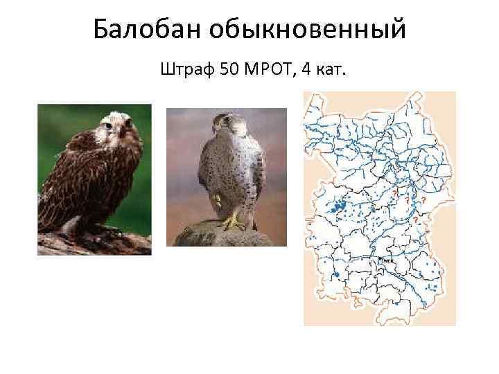 специальные картинки животные занесенные в красную книгу черлакского района омской области простым