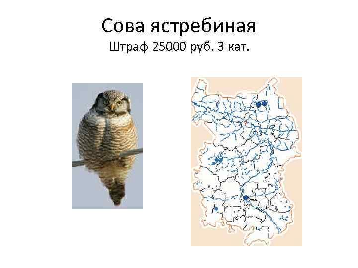 можете картинки животные занесенные в красную книгу черлакского района омской области проводится домашних условиях