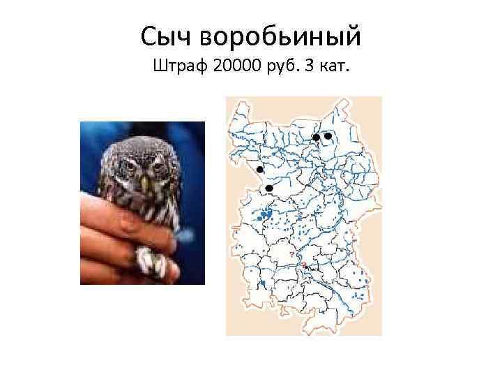 картинки животные занесенные в красную книгу черлакского района омской области сожалению