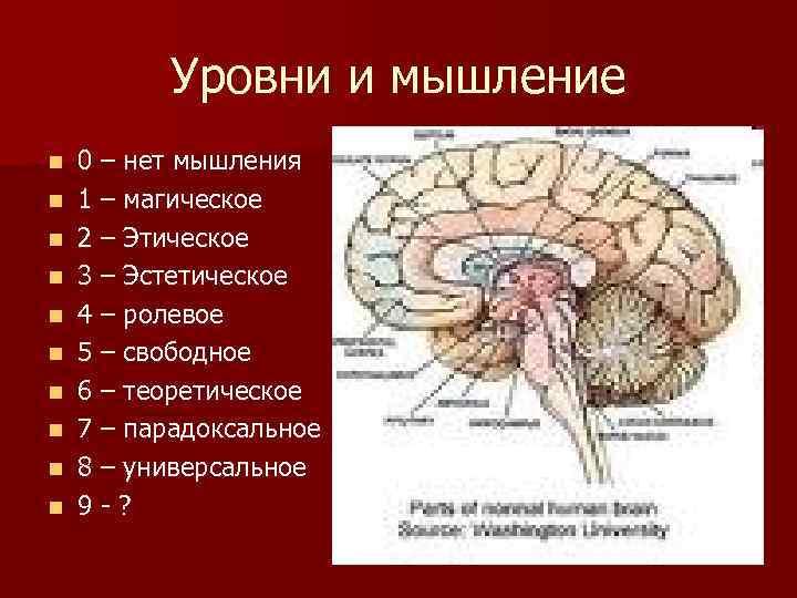 Уровни и мышление n n n n n 0 – нет мышления 1 –