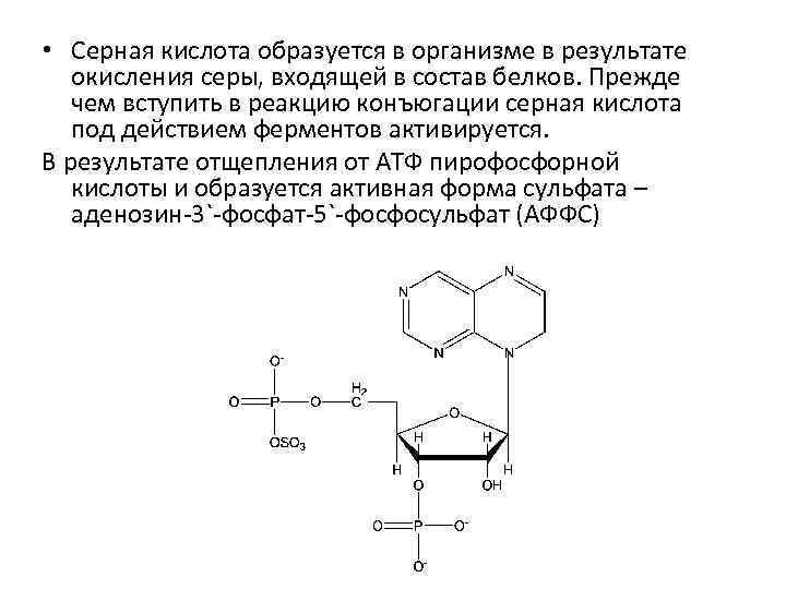 • Серная кислота образуется в организме в результате окисления серы, входящей в состав