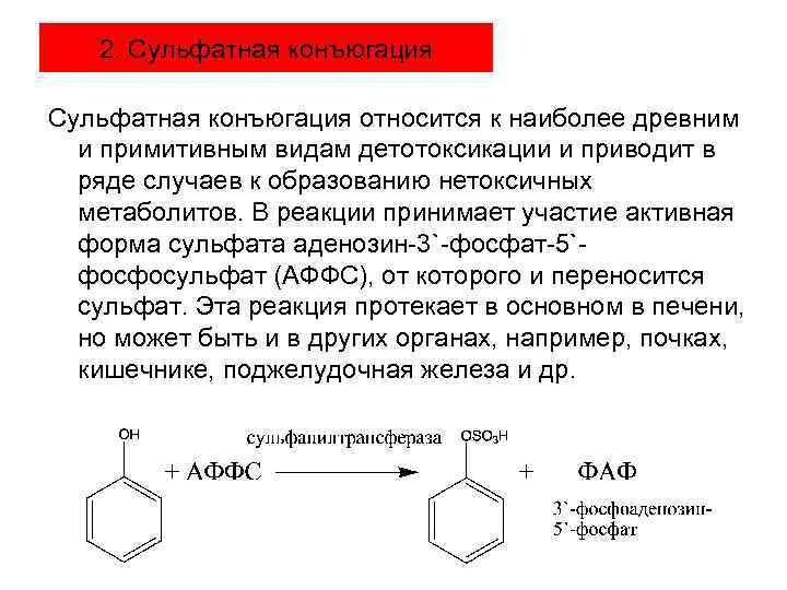 2. Сульфатная конъюгация относится к наиболее древним и примитивным видам детотоксикации и приводит в