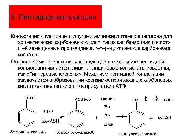 3. Пептидная конъюгация Конъюгация с глицином и другими аминокислотами характерна для ароматических карбоновых кислот,
