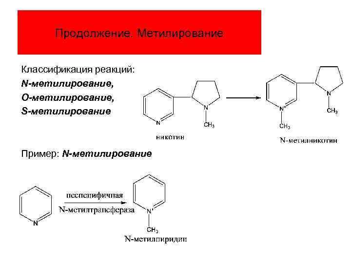 Продолжение. Метилирование Классификация реакций: N-метилирование, О-метилирование, S-метилирование Пример: N-метилирование