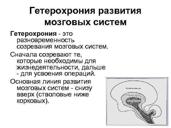 Гетерохрония развития высших психическ