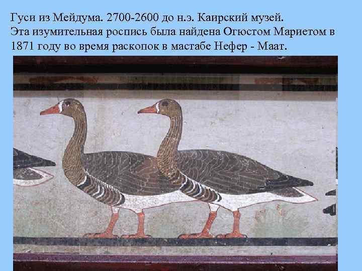 Гуси из Мейдума. 2700 2600 до н. э. Каирский музей. Эта изумительная роспись была