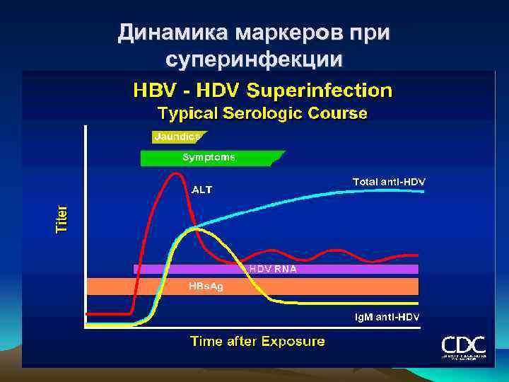 Динамика маркеров при суперинфекции