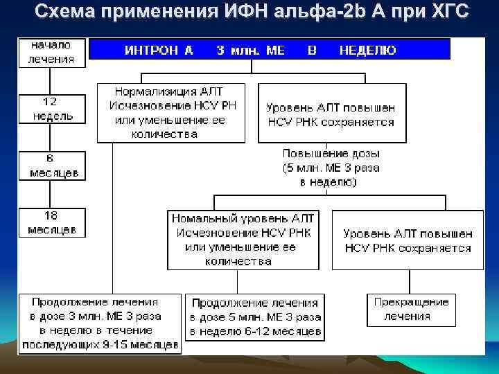 Схема применения ИФН альфа-2 b А при ХГС