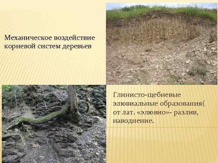 Механическое воздействие корневой систем деревьев Глинисто-щебневые элювиальные образования( от лат. «элювио» - разлив, наводнение.