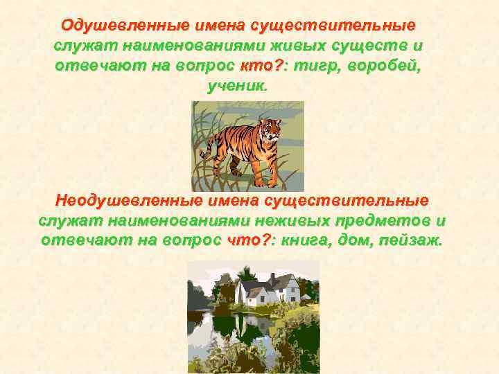 Одушевленные имена существительные служат наименованиями живых существ и отвечают на вопрос кто? : тигр,