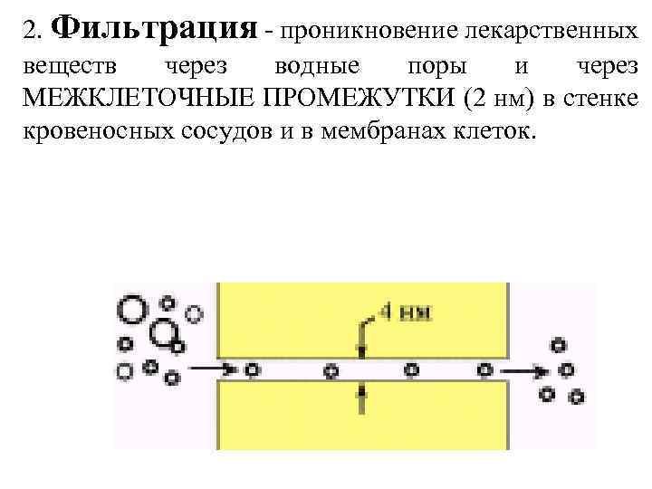 2. Фильтрация - проникновение лекарственных веществ через водные поры и через МЕЖКЛЕТОЧНЫЕ ПРОМЕЖУТКИ (2