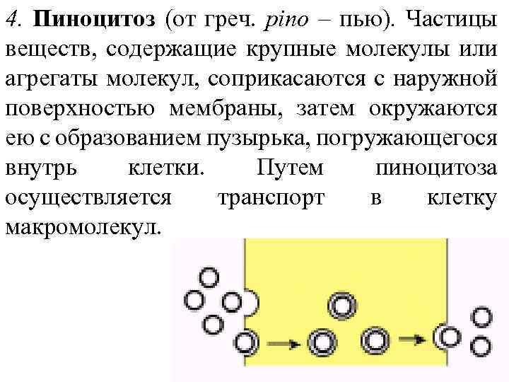4. Пиноцитоз (от греч. pino – пью). Частицы веществ, содержащие крупные молекулы или агрегаты