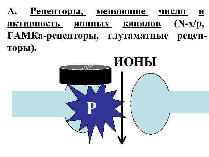 А. Рецепторы, меняющие число и активность ионных каналов (N-х/р, ГАМКа-рецепторы, глутаматные рецепторы). ИОНЫ Р