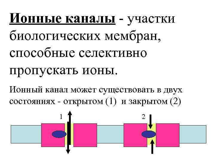 Ионные каналы - участки биологических мембран, способные селективно пропускать ионы. Ионный канал может существовать