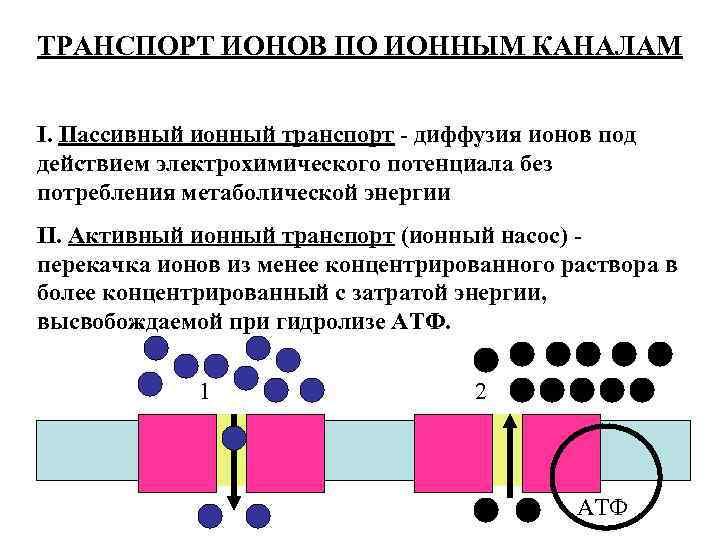 ТРАНСПОРТ ИОНОВ ПО ИОННЫМ КАНАЛАМ I. Пассивный ионный транспорт - диффузия ионов под действием