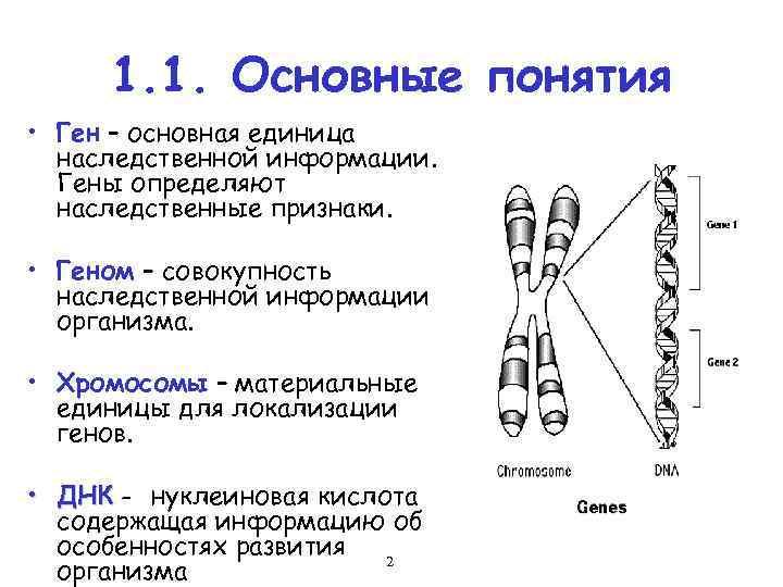 картинка какие гены хищники
