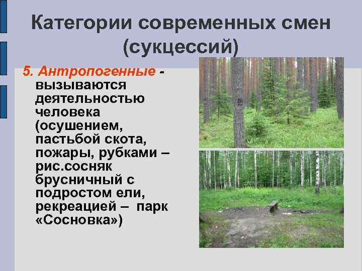 Категории современных смен (сукцессий) 5. Антропогенные вызываются деятельностью человека (осушением, пастьбой скота, пожары, рубками
