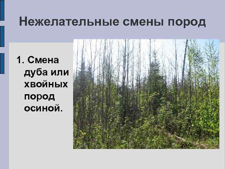 Нежелательные смены пород 1. Смена дуба или хвойных пород осиной.