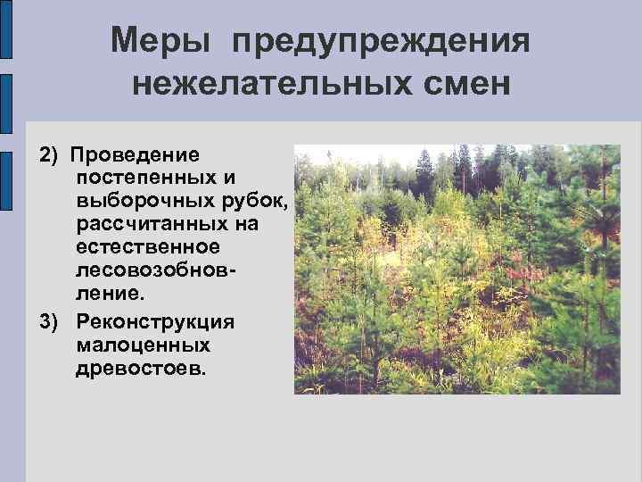 Меры предупреждения нежелательных смен 2) Проведение постепенных и выборочных рубок, рассчитанных на естественное лесовозобновление.
