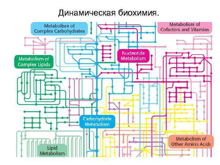 вашему динамическая биохимия картинка состояние влияет