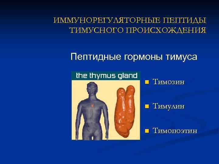 Иммунорегуляторные пептиды тимуса кровью и потом анаболики прототипы
