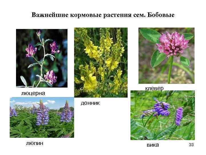 кормовые растения названия и фото была